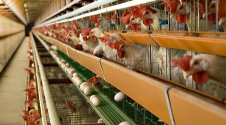 養鶏場から出る鶏糞を自然肥料に