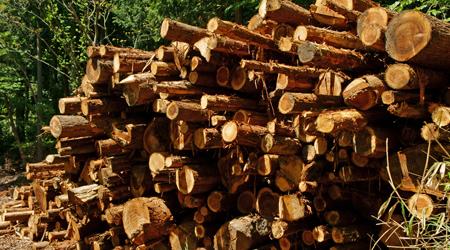 伐採木をそのまま投入