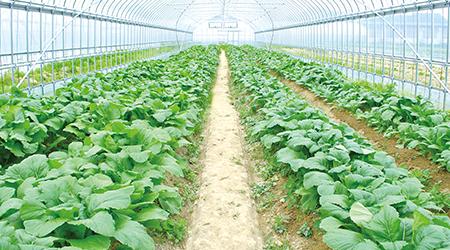 自然肥料+炭の力で、力強く美味しい野菜を育てる