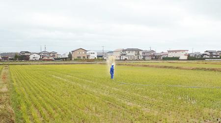 炭肥料の補助剤、害虫忌避剤として化学薬品に頼らない籾酢液